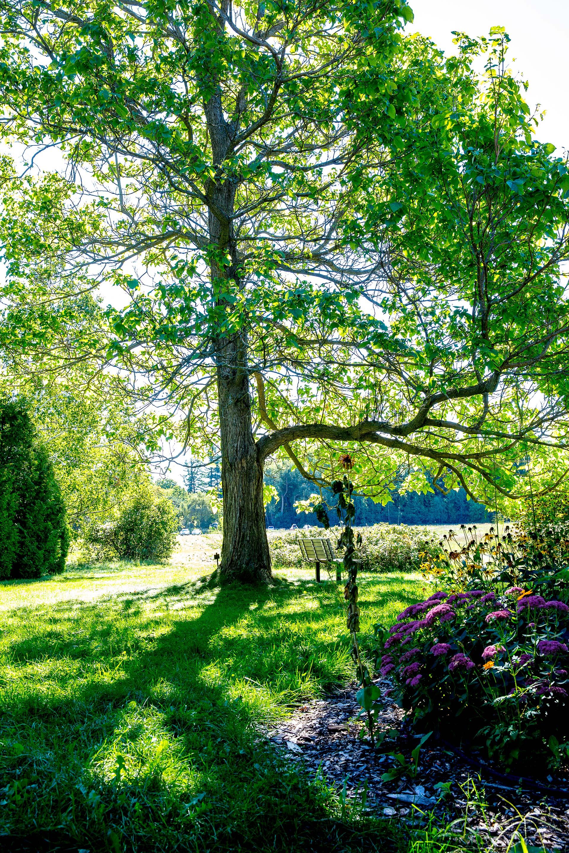 Arboretum fiche